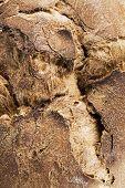 pic of crust  - Detail of bread crust Close up shot  - JPG