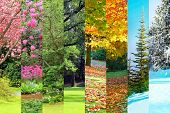 Collage of Cherry, maple, oak and cedar trees in four seasons. Spring, Summer, Fall, Winter.  poster