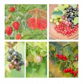 Collection Of Wild Berries. Collage Of Fresh Berries poster
