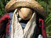 stock photo of polly  - Closeup of Polly scarecrow on a sunny day - JPG