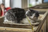 Alone Cat With A Serious Look, Lying On Cage In A Shelter Waiting For A Home, For Someone To Adopt H poster