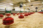 picture of hatcher  - The modern and new automated integrated poultry farm - JPG