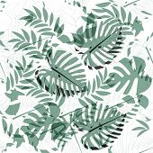 Seamless Pattern With Tropical Exotical Leaves. Light And Dark Green Colors. Monstera, Palm Leaves   poster