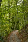 Green Forest. Beautiful View Of Nature. Landscape Photo Of Green Forest. Forest Nature On A Sunny Da poster