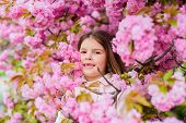 Kid On Pink Flowers Sakura Tree Background. Child Enjoy Life Without Allergy. Sniffing Flowers. Alle poster