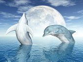 picture of porpoise  - Dolphins are marine mammals that are closely related to whales and porpoises - JPG