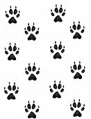 foto of paw-print  - Wolf fox or coyote paw prints all heading in an upward direction wallpaper - JPG