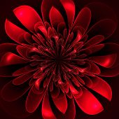 Beautiful Lush Red Flower On Black Background. Computer Generate