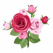 foto of rose bud  - Branch with red and pink roses - JPG