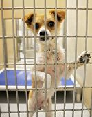 image of forlorn  - a dog in an animal shelter - JPG