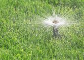 foto of sprinkler  - automatic irrigation system with sprinkler watering fresh lawn - JPG