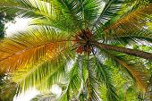 foto of coco  - coconut tree background - JPG