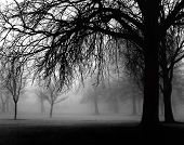 picture of hazy  - a very foggy day in the park - JPG