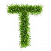 pic of letter t  - Alphabet grass  - JPG