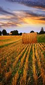 stock photo of farm land  - Golden sunset over farm field with hay bales - JPG
