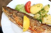 stock photo of plate fish food  - fish menu closeup - JPG