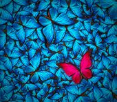 pic of flying-insect  - beautiful background with lot of different butterflys - JPG