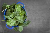 stock photo of slating  - Spinach colander - JPG