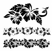 stock photo of hawaiian flower  - Various island black and white hibiscus hawaiian tropical flowers - JPG