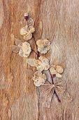 foto of mulberry  - Old brown mulberry paper book isolated  - JPG
