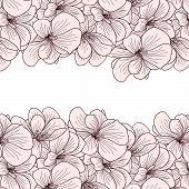 picture of geranium  - Geranium flowers background with copyspace on white background - JPG