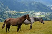 image of yin  - Yin yang black and white horses feeding on the mountain pasture with mountains and village in background - JPG