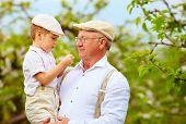 stock photo of grandpa  - cute grandpa with grandson on hands in spring garden - JPG