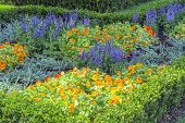 image of  plants  - Beds of colorful summer plants planted in the garden outside - JPG