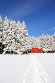 image of red barn  - Red barn at the edge of forest in snow landscapen - JPG