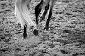image of high-quality  - high resolution and superb quality equine themed photos - JPG