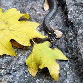 foto of snake-head  - Grass - JPG