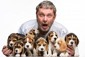 foto of puppy beagle  - The man and big group of a beagle puppies on white background - JPG