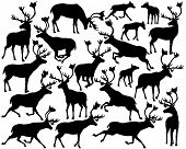 picture of caribou  - Set of illustrated silhouettes of reindeer or caribou standing - JPG