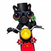 Постер, плакат: Motor Bike Good Luck Dog