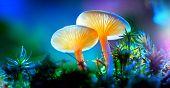 Mushroom. Fantasy Glowing Mushrooms in mystery dark forest close-up. Beautiful macro shot of magic m poster