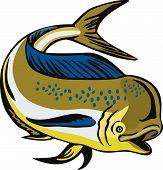 stock photo of mahi  - Vector art of a Dorado dolphin fish - JPG