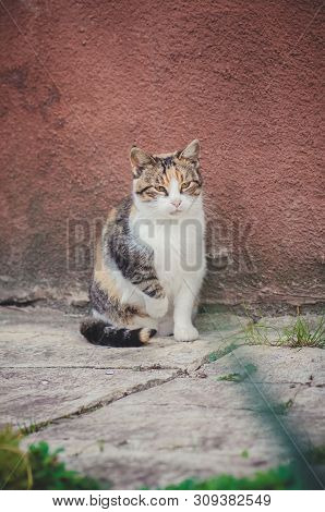 poster of Village Cat Resting. Cat In A Farm