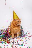 Adorable Red British Feline With Confetti And A Party Hat poster