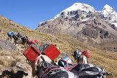 stock photo of workhorses  - Mule train carrying loads with Cuyoc mountain in background Cordillera Huayhuash Andes Peru South America - JPG