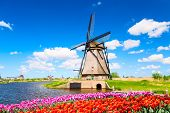 Colorful Spring Landscape In Netherlands, Europe. Famous Windmill In Kinderdijk Village With A Tulip poster
