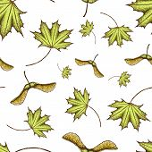 Seamles Scolored Maple Leaf And Seeds Pattern. Vintage Colored Engraved Illustration Of Maple Leaf.  poster
