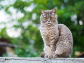 Gray Cat With Orange Eyes Sits On The Background Of Nature poster