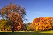 Beautiful autumn landscape in the park. Saturated colors of the autumn forest
