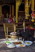 stock photo of koh phi-phi  - Cat eating at Buddhist temple in Koh Phi Phi Thailand - JPG