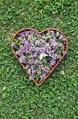 picture of oregano  - medical herb oregano wild marjoram flowers in heart form basket on garden grass - JPG