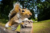 pic of bench  - Grey Squirrel  - JPG