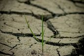 pic of northeast  - Land cracked when dry season at northeast of Thailand - JPG
