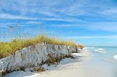 foto of sea oats  - Beautiful Sand Dunes and Sea Oats on the Coastline of Anna Maria Island Florida - JPG