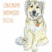 pic of sheep-dog  - Vector color sketch Caucasian Shepherd Dog breed sitting and smiling - JPG