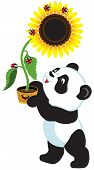stock photo of panda  - cartoon panda bear holding a sunflower  - JPG